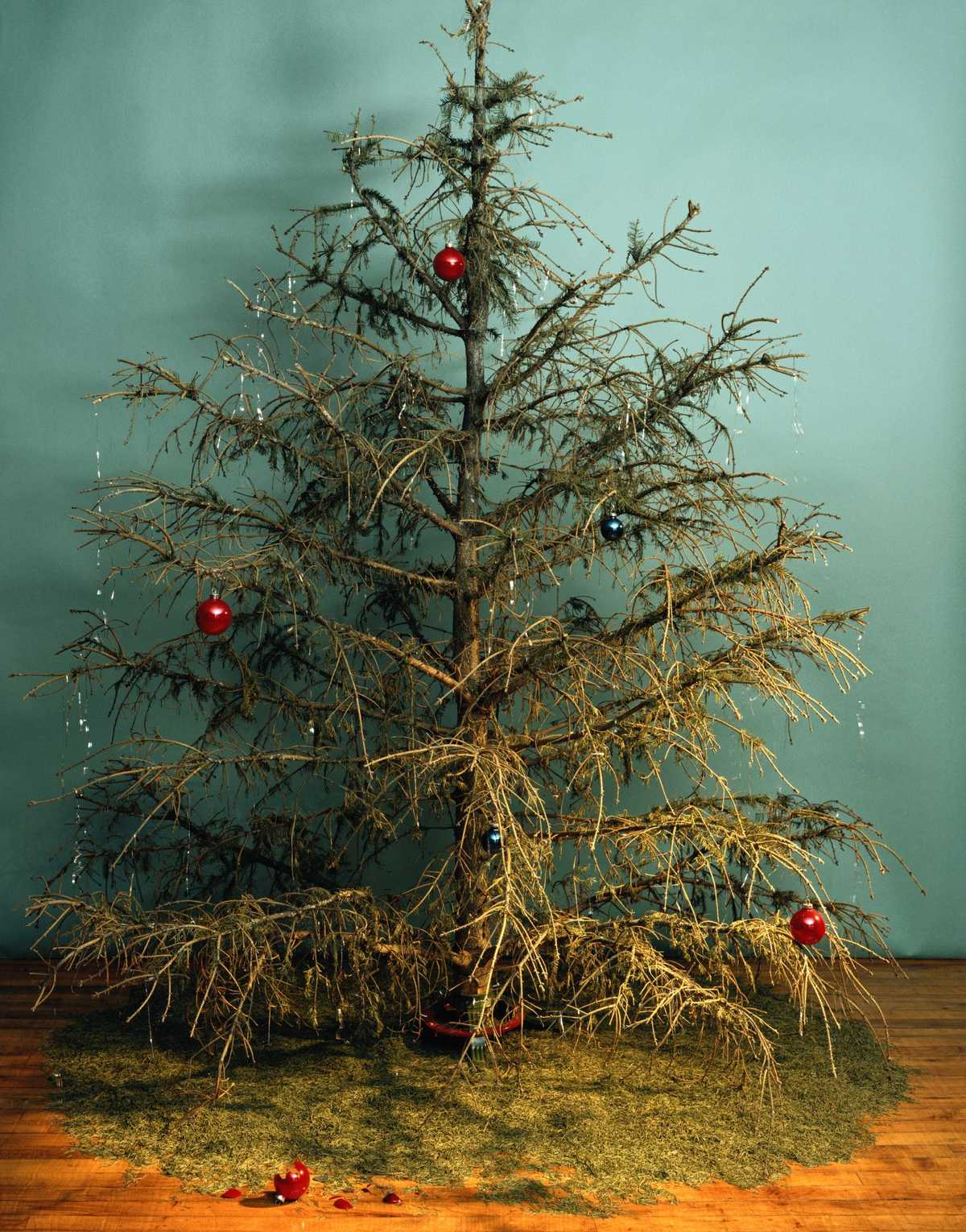 When your Christmas tree dies, make sure to dispose of it properly